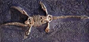plesiosaure